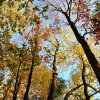These are the trees in the woods behind the Woodland cottage! This was taken on a Sunday afternoon in October of 2014!